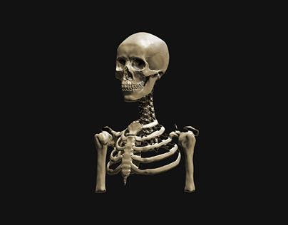 Z-brush skeleton study