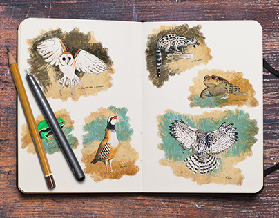 Avicea - Wildlife illustrations