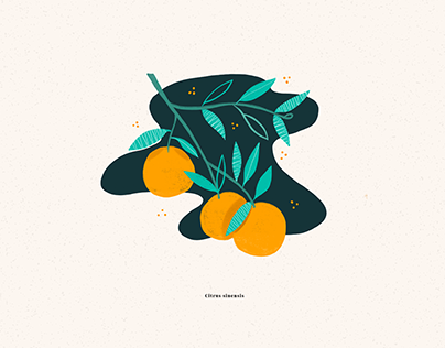 Fruit illustrations // 2019