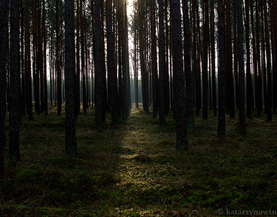 Leśne ścieżki/ Forest paths - part 1