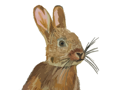 Illustrations- Animals