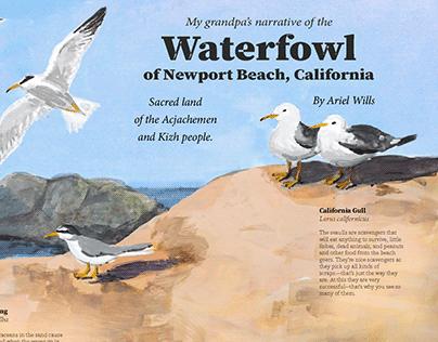 Waterfowl and grandpa's narrative—Interpretive Poster