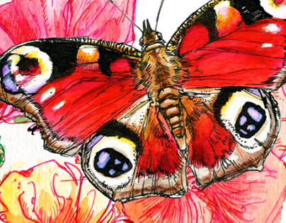 My VIP Magazine Spring 2014: Butterfly Guide