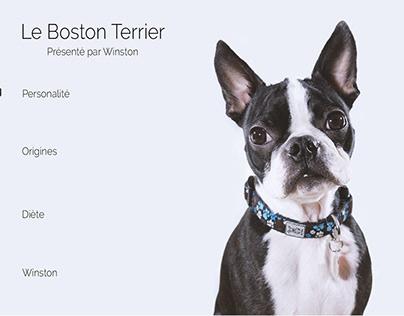 Site web conceptuel sur le Boston Terrier