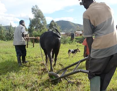 Farming in Tanzania