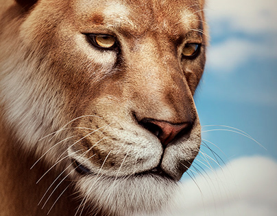 Lioness... the true king.