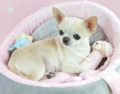 M I N I A T U R E | Dog boutique