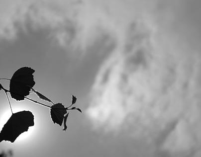 Letanías de la tierra muerta. Poema de Alfonsina Storni