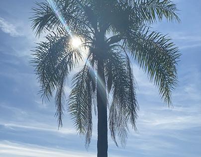 """New Release from Julianne Tanella """"Island in the Sun"""""""