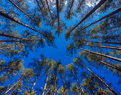 Forest sky.