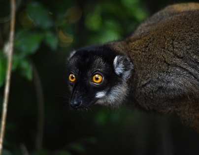 Nosy Be/Madagascar del Nord