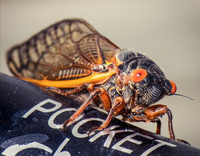 The Cicadas Are Loud Today - Video