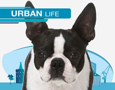 Urban Mug Nationwide Campaign for Royal Canin Poland.