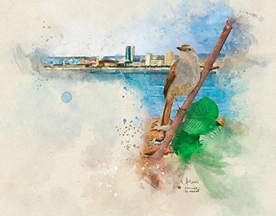 50 Aves de Angola