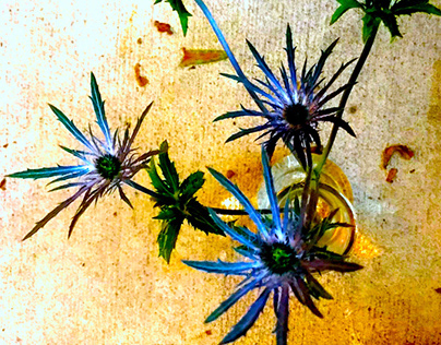 IPHONOGRAPHY : BLUE THISTLE