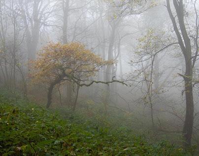 Mist on Costorphine Hill