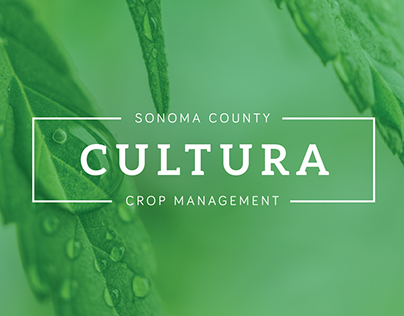 Cultura Mgmt Logo & Brand Development