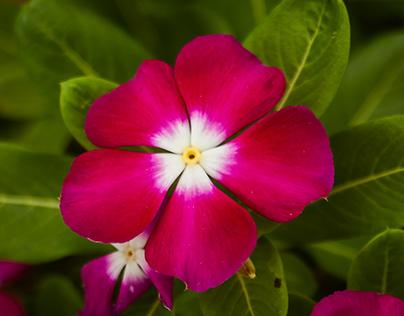 Beauty of Nature II