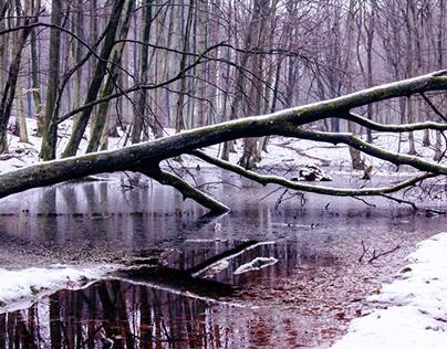 Winterpostcard from Jasmund Nationalpark