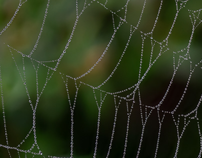 Photo Series: Nature / Case 35: Spider Web