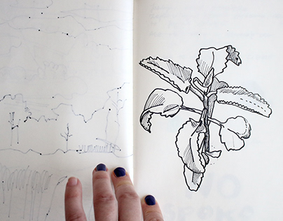 plants from my sketchbook