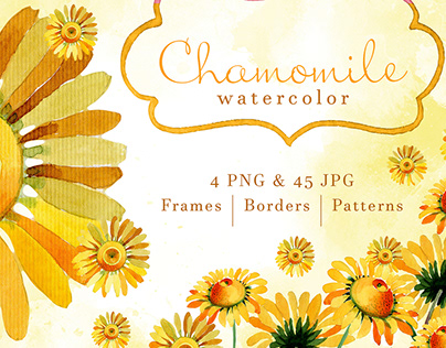 Wildflower yellow chamomile PNG watercolor set