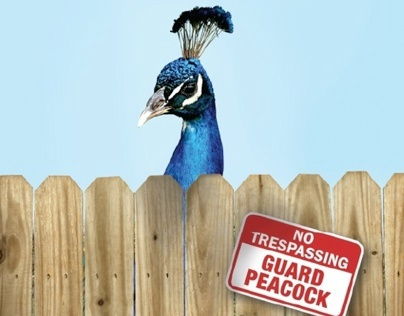 Peacock Magazine Advertisement