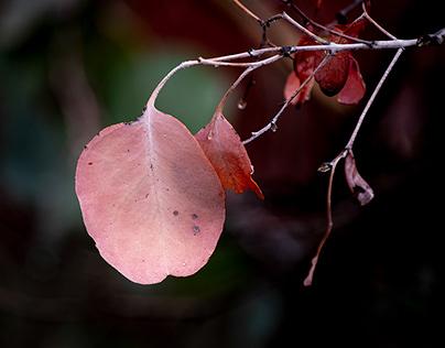 Gum leaves after fog