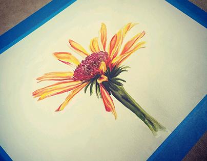 Watercolor :: Coneflower