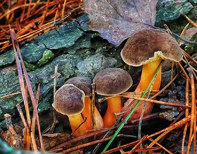 Fungi. Phone hunting