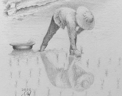 Pencil Drawing Ricefarmer