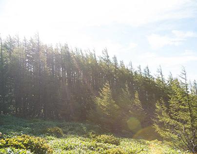 ある日、森の中