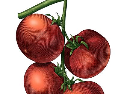 Tomato twig illustration vintage style