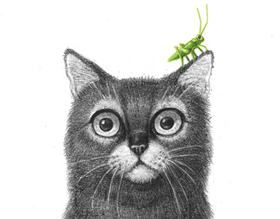 The cat and the grasshopper