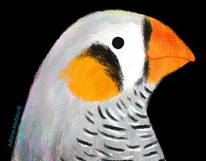 Animals Portraits - Series