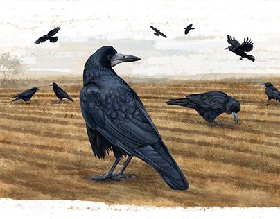 Grandfather's birds
