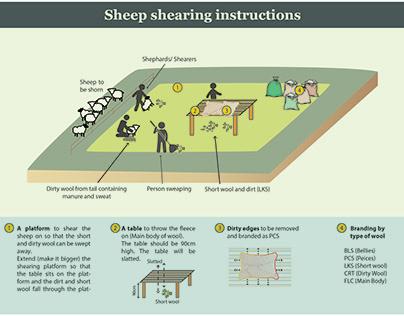 Infographic describing the process of sheep shearing
