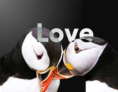 Design weekend with puffins