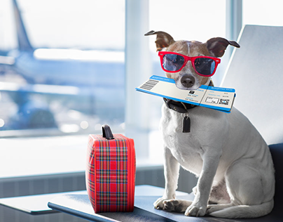 Pet Transportation Service | LATAM Airlines