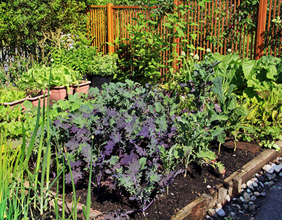 Three Common Myths about Organic Gardening