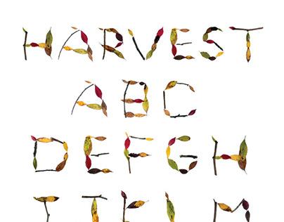 3D Type: Harvest
