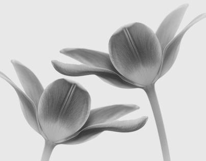 3 galleries of flowers