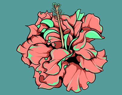 Hibiscus Illustration