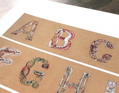 Lettering_Human Anatomy Alphabet