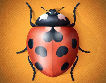 Garden Wildlife – Insects Pt.1