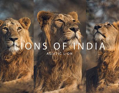 LIONS OF INDIA - GIR NATIONAL PARK, GUJARAT