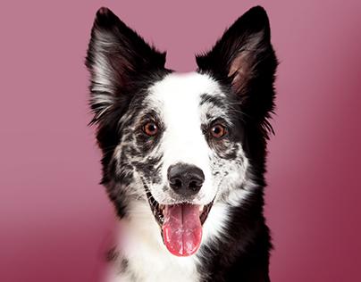 La prueba de emoción Dogourmet