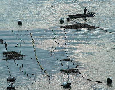 Seafood Farming, Yantian, Fujian