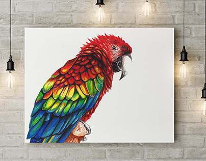 Macaw Parrot, crayons drawing