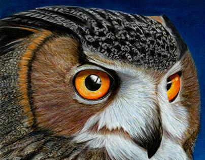 Animal Portraits by Tyrone Bayliss